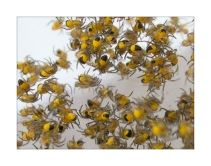 Spinnenkinder_gelb