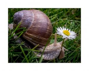 Schnecke und Blume