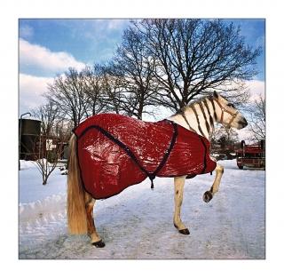 pferd-im-schnee