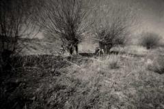 Pinholes - Dosenmoor